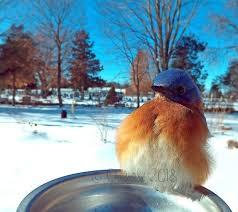 Bluebird-of-happiness | Tumblr