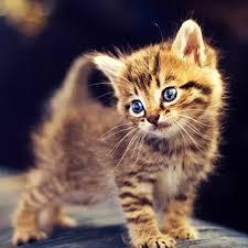 رمزيات قطط كيوت 2019 رمزيات