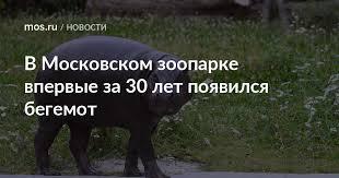 В Московском зоопарке впервые за 30 лет появился <b>бегемот</b> ...