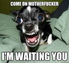 come on motherfucker i'm waiting you - Chihuahua Logic - quickmeme via Relatably.com