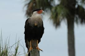 Image result for kissimmee prairie preserve state park images