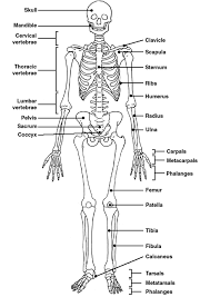 skeletal system   at least   of it  there is so much more to    skeletal system   at least part of it  there is so much more to remember   my passion  my life  lt    pinterest