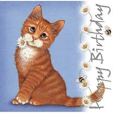 Image result for happy birthday kitten