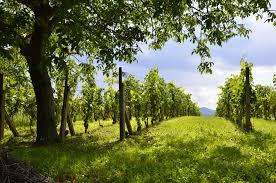 International Organisation of Vine and <b>Wine</b>: OIV