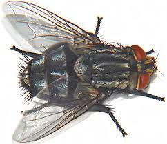 """Résultat de recherche d'images pour """"jupiter mouches sartre"""""""