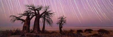 Botswana | <b>Natural Selection</b>