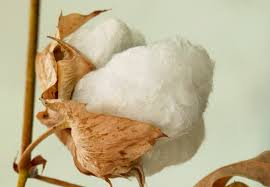For the <b>love</b> of <b>cotton</b> - TexMeroe Project