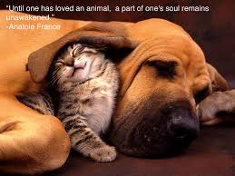 Pets N More: Inspiring Quotes For People Who Love Animals