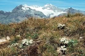 WWMM - La flora e la vegetazione delle praterie alpine 7/19