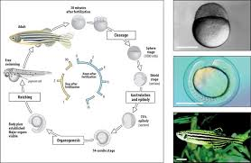 """""""<b>White Mouse</b> in Water"""" - Infinitus Develops New Technology of ..."""