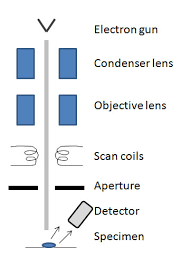 sem and its applications for polymer scienceschematic drawing of the sem illustrating placement of electron generation  collimation process  sample interaction and electron detection
