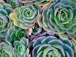 Though Succulents May Not Be The Best At Purifying Air They Are Beautiful Plants It You Want To Add Greenery Office These Plants Perfect