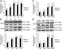 <b>AP</b>-<b>1</b> Transcription Factors c-FOS and c-JUN Mediate GnRH ...