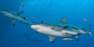 Searching for <b>Sharks</b> in Street View