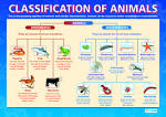 Images & Illustrations of classification