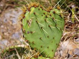 la nature a du coeur (jeu) Images?q=tbn:ANd9GcQ0UHV5fh-YbybQessydc5CWJ7S_03mpPukEW-xwnVIcyWXIH2yng