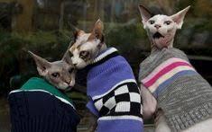 <b>Одежда для кошек и</b> кошки в одежде — замечательные ...
