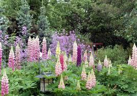 Small Picture Wildflower Garden Design Markcastroco