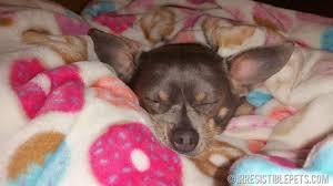 Irresistible Links {<b>Chihuahuas</b>, <b>Donuts</b>, + DIY} - Irresistible Pets