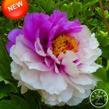 Купите Цветок, <b>Растение</b>, Свадебная Брошь онлайн, Цветок ...