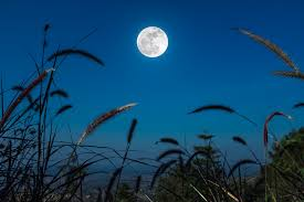 Full Moon Update 9-13-19 - The Power Path