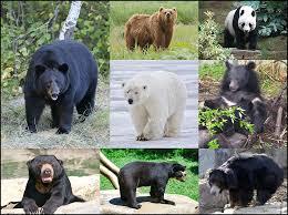 <b>Bear</b> - Wikipedia