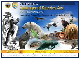 protection of endangered species essay subscribe now