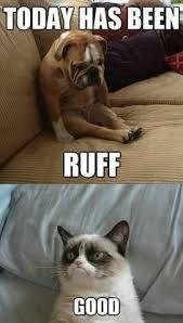 Grumpy Cat on Pinterest | Grumpy Cat Christmas, Grumpy Cat Meme ... via Relatably.com