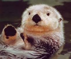 Cat Power <b>Happy</b> Hour #30 | Animals, <b>Baby</b> animals, <b>Sea</b> otter