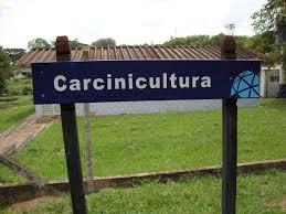 Resultado de imagem para Carcinicultura