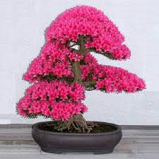 Image result for bonsai plants