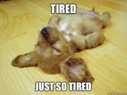 Tired Dog memes | quickmeme via Relatably.com