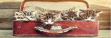 """Résultat de recherche d'images pour """"bonnes vacances avec son Animal"""""""