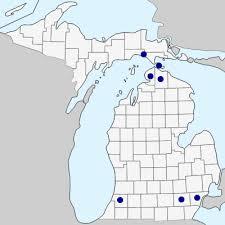 Hyoscyamus niger - Michigan Flora