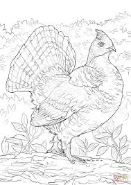 Small Picture Ruffed Grouse coloring page Free Printable Coloring Pages
