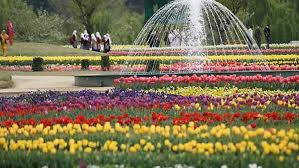 <b>Tulip Garden</b> | District Srinagar, Government of Jammu and Kashmir ...