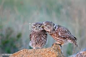 64,219 <b>Love Birds</b> Stock Photos, Pictures & Royalty-Free Images ...