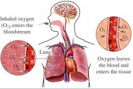 máy tạo oxy, máy tạo oxy 5 lít vision air