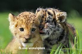 <b>Animal Sphere</b> - Home   Facebook