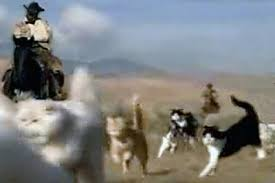Image result for herding cats gif