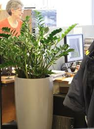 Nature At Work Provide Service And Maintain Great Looking Plants For Your Offices Reception Other Public Areas