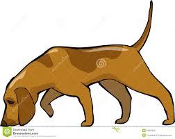 Πόσα είδη κυνηγόσκυλων έχουμε;