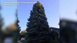 <b>Chicago's</b> 2019 <b>Christmas</b> tree comes from Elgin man's front yard ...