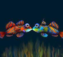 Mandarinfish Wall Art   Redbubble