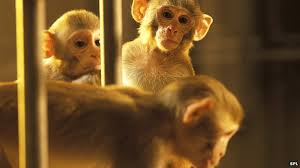 Master monkey's brain controls sedated '<b>avatar</b>' - BBC News