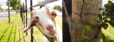 Airfield Estate: Urban <b>Farm</b> Dublin - Family Day Out - Visitor Experiene