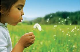 Image result for allergies sneezing