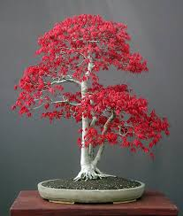 Image result for bonsai