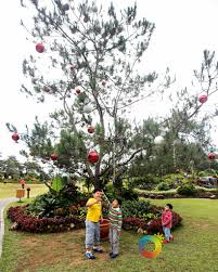 a manor at camp john hay baguio christmas a photo essay a manor christmas morning our awesome planet 52 jpg