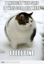 My fat friends always say this when I feel cold.   Fat Cats, Cats ... via Relatably.com